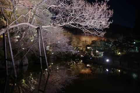 20110313-27.jpg