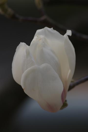 20110403-07.jpg