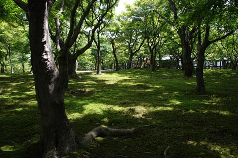 20110806-10.jpg